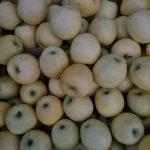Pommes (Golden, fuji, reines...)